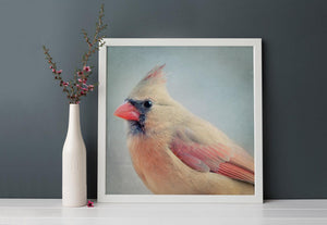 "Bird Portrait, Fine Art Bird Photography Print ""Female Cardinal No. 4"""