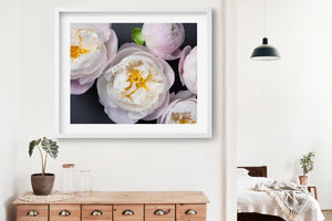 "Fine Art Flower Photography Print ""Peony No. 37"""
