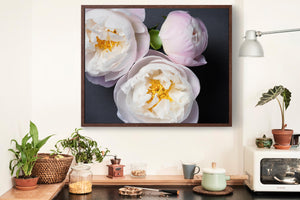 "Fine Art Flower Photography Print ""Peony No. 38"""