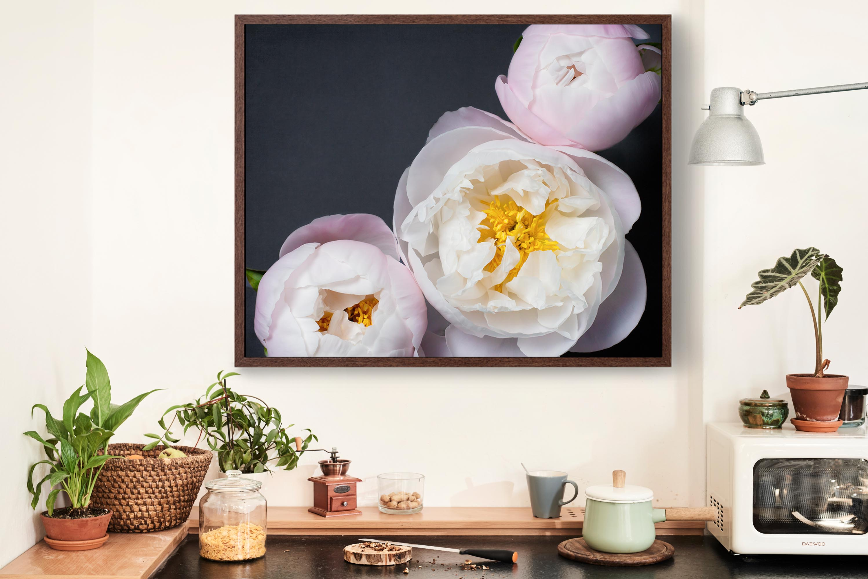"Fine Art Flower Photography Print ""Peony No. 47"""