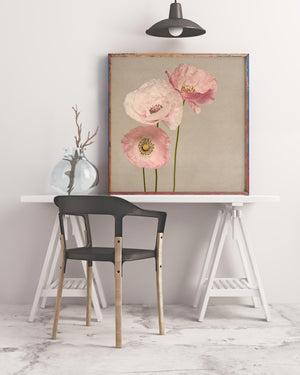 Sample framed image of shirley poppies art print