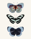 Blue Butterfly Print