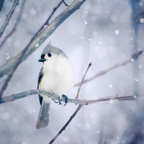 Birds in Snow - Set of 3