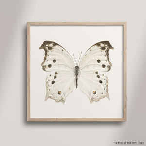 SQ Butterfly No. 3 - Mother-of-Pearl Butterfly