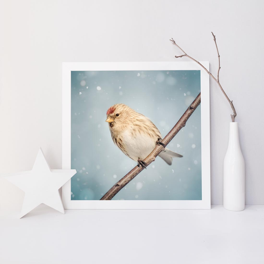 "Fine Art Bird Photography Print ""Redpoll in Snow No. 9"""