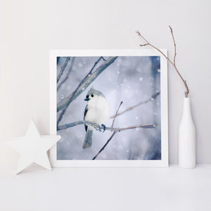 Tufted Titmouse in Snow No. 9