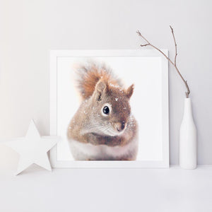 "Fine Art Squirrel Photo Print ""Red Squirrel in Snow"""