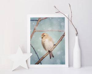"Fine Art Bird Photography Print ""Redpoll in Snow No. 10"""