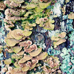 Abstract Lichen Nature Photography Print