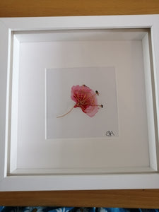 Silver Poppy original watercolour and wire sculpture - Glitter and Gem Jewellery