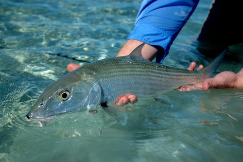 Andros South Lodge - Bahamas Fly Fishing Adventures