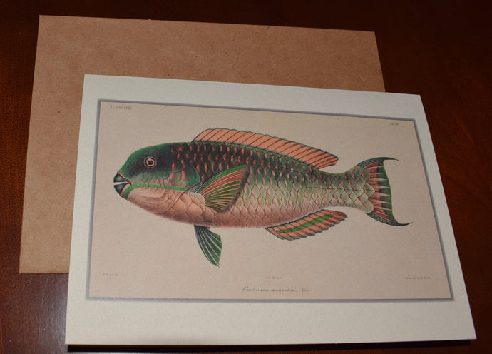 Fish & Duck Antique Art Stationery