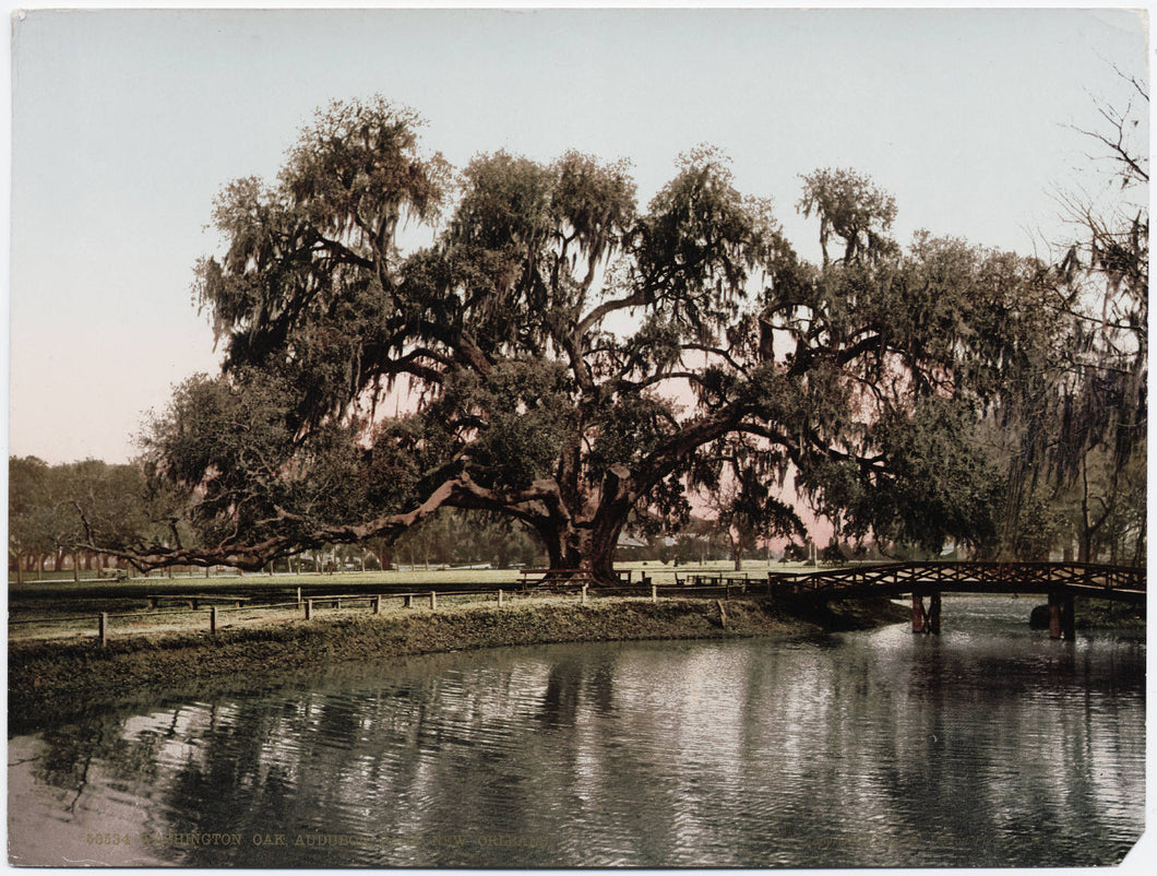 Walkin' & Preservin' - All About Audubon Park - 10/28 - Morning