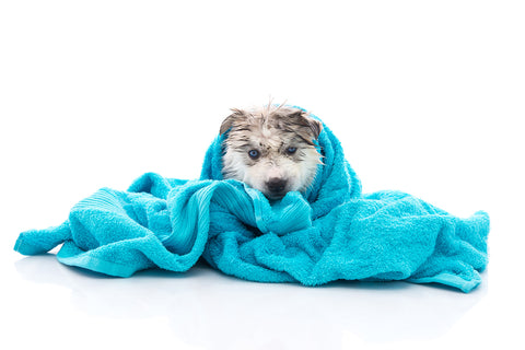 Bathe your dog. Soothe-N-Itch Natural Colloidal Oatmeal Dog Shampoo for Dogs and Cat Shampoo by Paws-A-Bunch.
