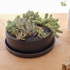 "Bespoke Succulent Arrangement by Field Guide (9.5"") - Field Guide"