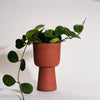 UV Planter by Salamat for Field Guide - Field Guide