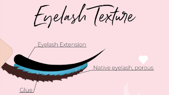eyelash texture or lash porosity
