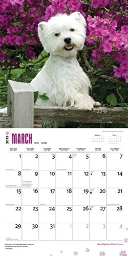 West Highland White Terriers 2015 Square 12X12 (Multilingual Edition)