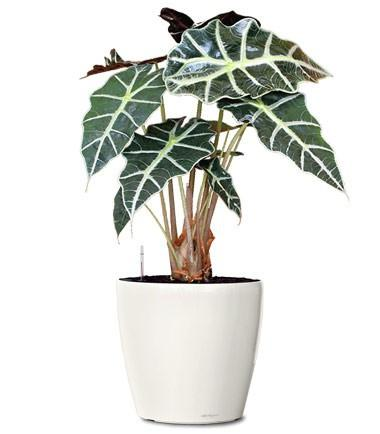 Medium Sized Office Plant Package