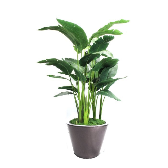 Small Office Plant Package - Coming Soon