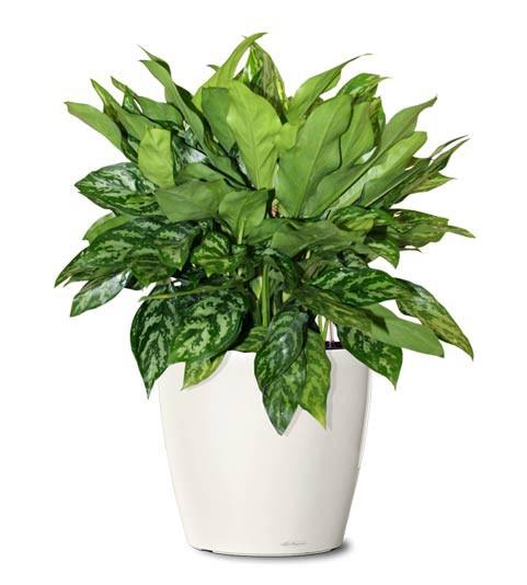 Large Office Plant Package - Coming Soon
