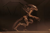 NECA Aliens – 7″ Scale Action Figure – Series 14 Alien Resurrection - Set of 2