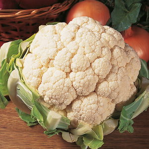 Cauliflower Aalsmeer F1