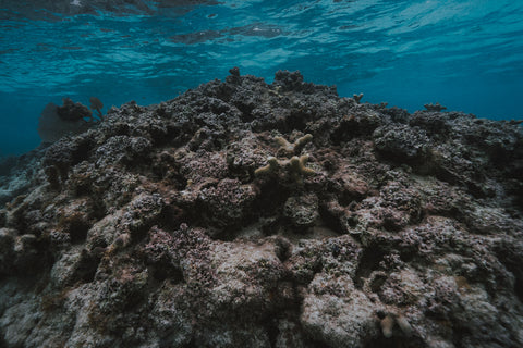 the destruction of coral reefs