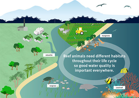 water quality and coral reefs