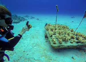 cozumel coral reef restoration program