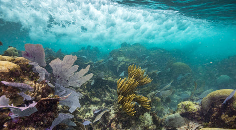 healthy coral reef nature