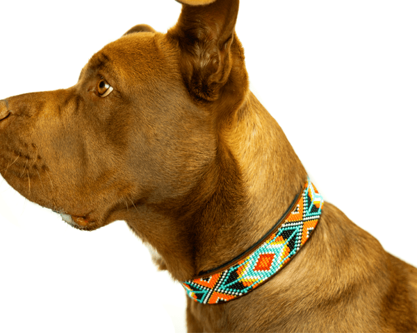 Matching leash/dog collar Biarritz Sambboho Bundle