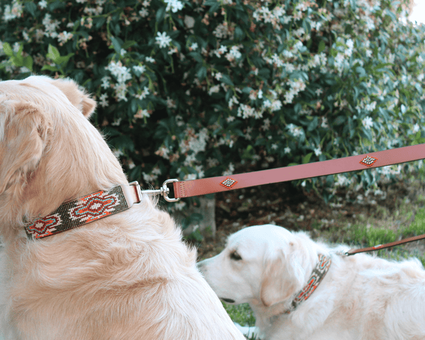 Matching leash/dog collar Boho Chic Sambboho Bundle