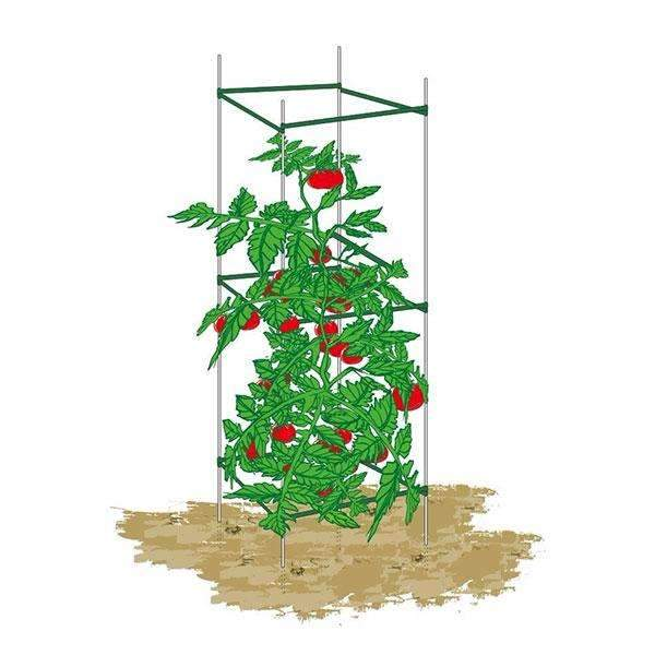 Square Plant Cage, Sturdy And Durable, 5Ft