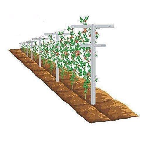 Raspberry Trellis with Adjustable Arms