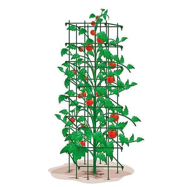 Tomato Trellis 64Inch H by 14Inch Square, Green