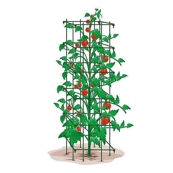 Heavy Duty Tomato Trellis 47Inch H by 14Inch, Green