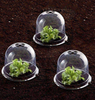 Plastic Protective Garden Cloche with Ground Securing Pegs