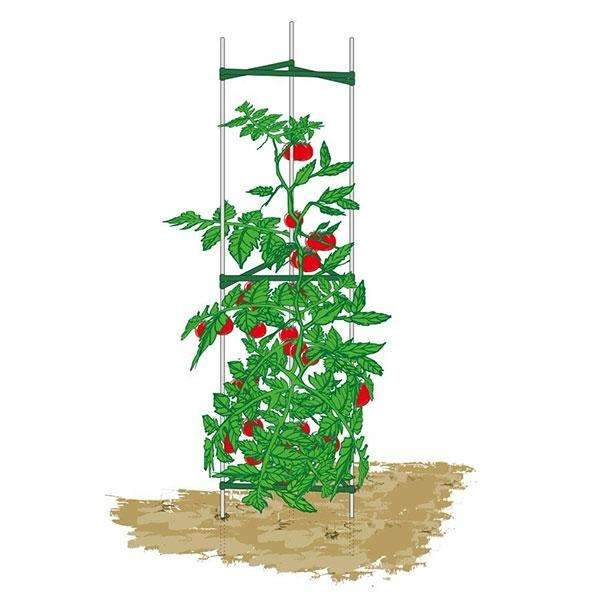 Plant Cage, Sturdy And Durable, 5Ft