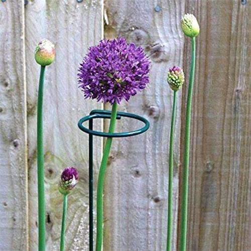 Round Vegetables Stalk Plant Climbing Support Trellis