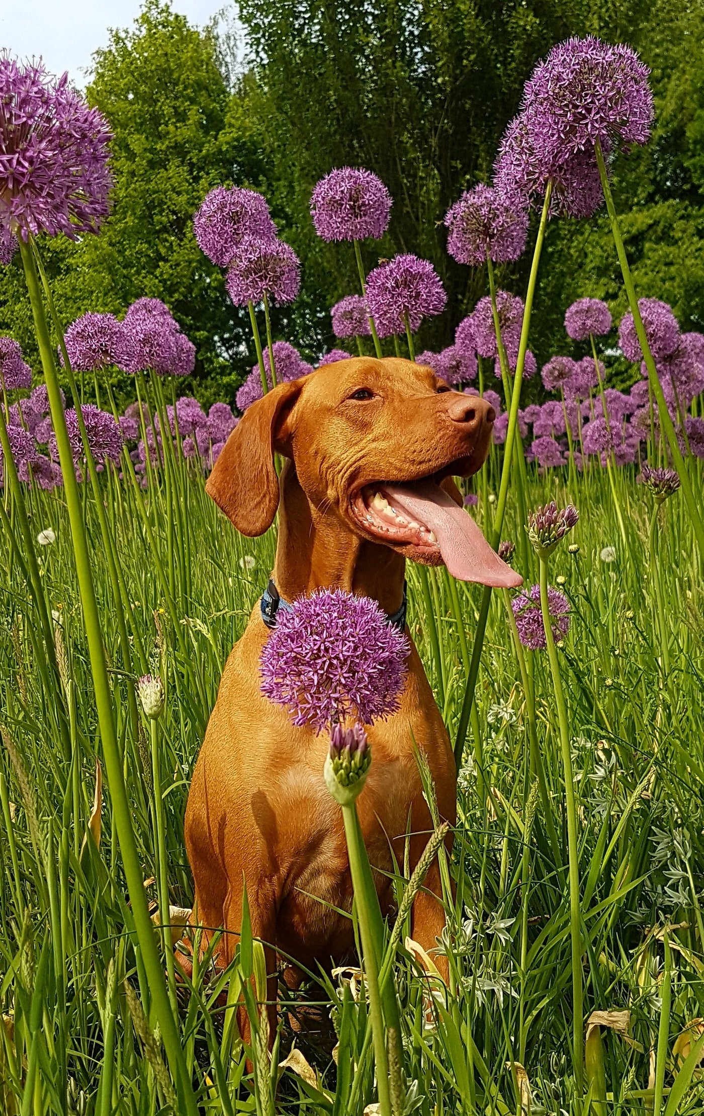 the best cbd oil for dogs with allergies