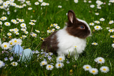 cbd oil for rabbits with anxiety