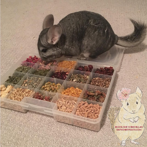 Healthy Chinchilla Treats Starter Pack