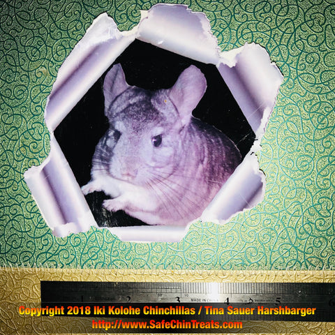 Chinchilla Waterproof Decal