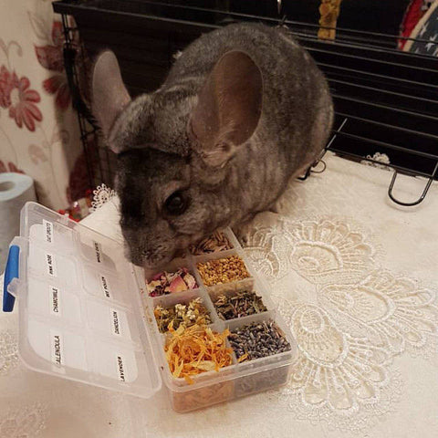 Healthy Chinchilla Treats Sampler Pack