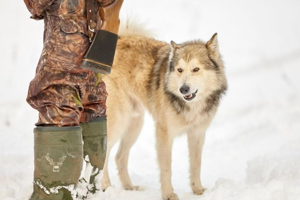 wolf picture with a hunter in the snow