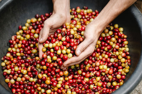 Effect of the Increased Demands of Single Origin on its Production