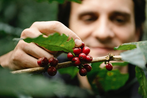 Meaning of single origin to a farmer