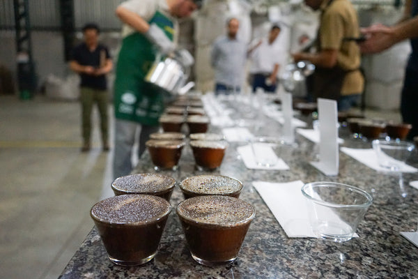 Cupping Cup Of Excellence - Coffee Gems