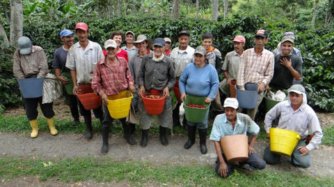 Coffee collectors in a colombian farm Coffee Gems